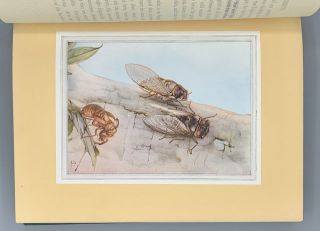 """Fabre's Book of Insects Retold from Alexander Teixeira De Mattos' Translation of Fabre's """"Souvenirs Entomologiques"""" by Mrs. Rodolph Stawell"""