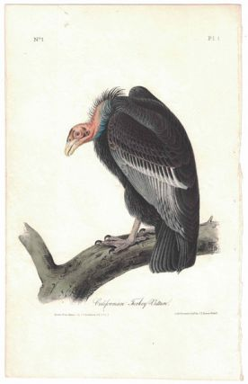 California Turkey Vulture, Plate 1. John James Audubon