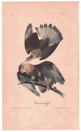 Caracara Eagle, Plate 4. John James Audubon