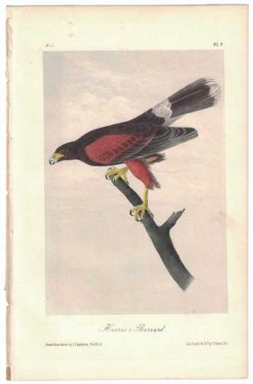 Harris's Buzzard, Plate 5. John James Audubon