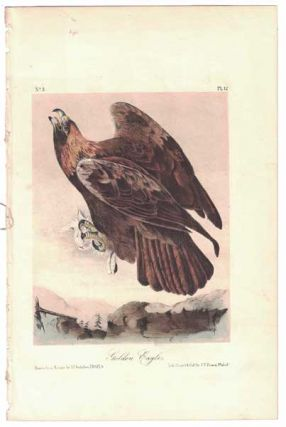 Golden Eagle, Plate 12. John James Audubon