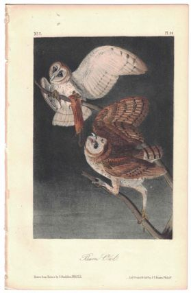 Barn Owl, Plate 34. John James Audubon