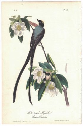 Fork-tailed Flycatcher, Plate 52. John James Audubon
