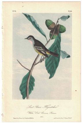 Least Pewee Flycatcher, Plate 66. John James Audubon