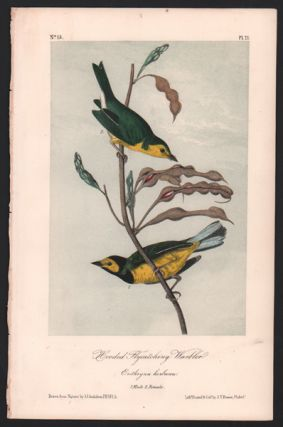 Hooded Flycatching Warbler, Plate 71. John James Audubon