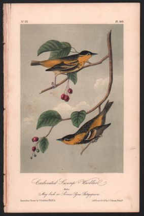 Carbonated Swamp Warbler, Plate 109. John James Audubon