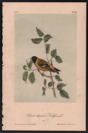 Black-headed Goldfinch, Plate 182. John James Audubon