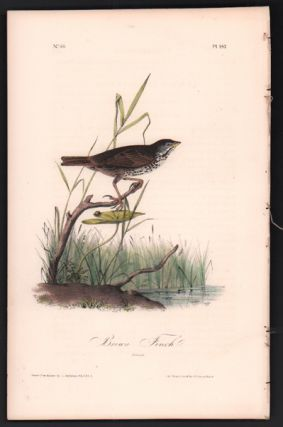 Brown Finch, Plate 187. John James Audubon