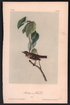 Morton's Finch, Plate 190. John James Audubon